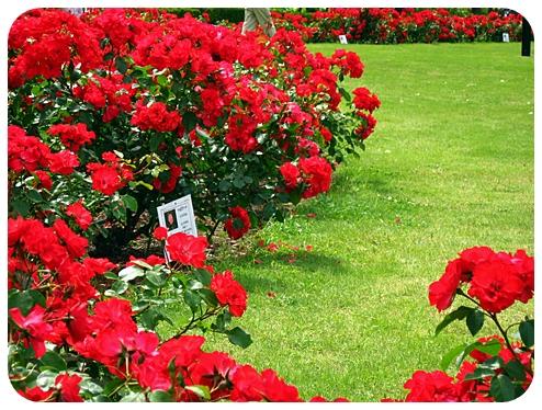横須賀ならではの風景 *ヴェルニー公園*