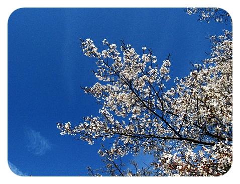 春の称名寺