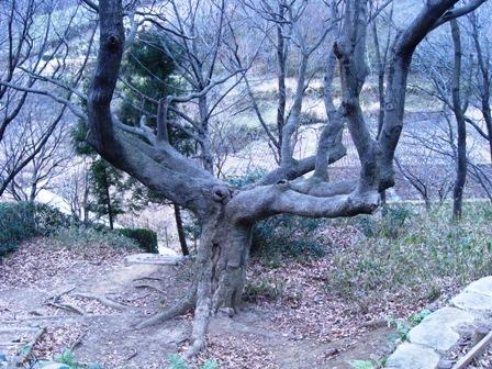 この木何の木!?