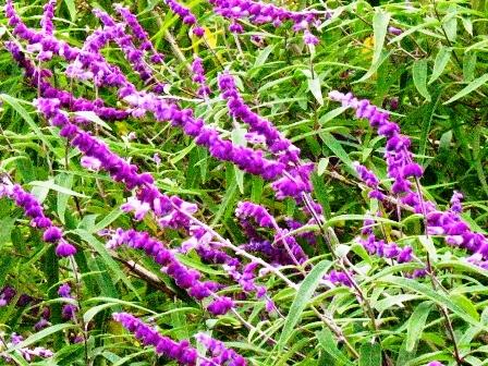 花の国ハーブ園
