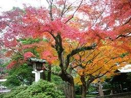 鎌倉宮と覚園寺の紅葉と凛林
