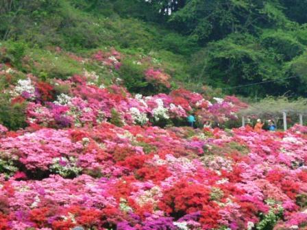 葉山・花の木公園