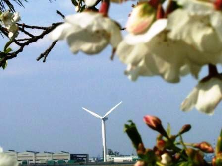 海側からの風車