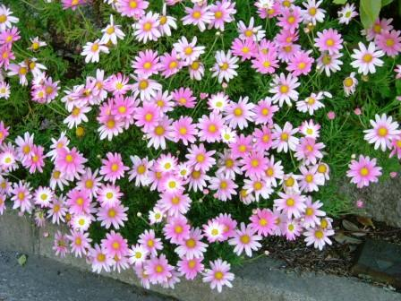 湘南国際村の花々