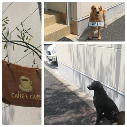 CAFFE E CÁNE